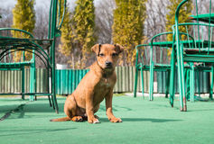 A lonely young puppy dog. A yellow lonely young puppy dog royalty free stock photos