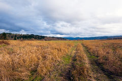 Yellow long grass with road track on big autumn meadow Royalty Free Stock Image