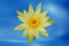 Yellow lotus flower. Yellow blooming lotus flower in the blue sky Stock Photo