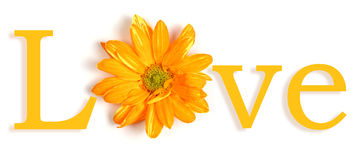 Yellow love. The word love in English with the O replaced by a yellow flower Royalty Free Stock Image
