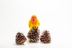 Yellow Lovebird on branch Stock Image