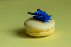 Yellow Macaroon Stock Image