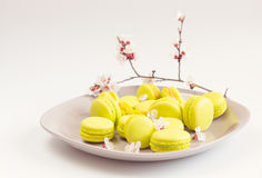 Yellow macaroons on gray plate, selective focus Royalty Free Stock Image