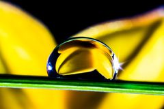 Yellow, Macro Photography, Close Up, Drop Royalty Free Stock Photography
