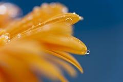 Yellow, Macro Photography, Close Up, Drop Stock Image