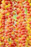 Yellow Madagascar Palm Fruits. Royalty Free Stock Photos