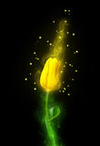 Yellow magic tulip Stock Image