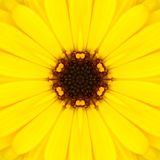 Yellow Mandala Concentric Flower Center Kaleidoscope Stock Image