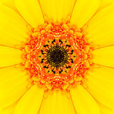 Yellow Mandala Concentric Flower Center Kaleidoscope Royalty Free Stock Photo