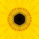 Yellow Mandala Concentric Flower Center Kaleidoscope Stock Image