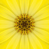 Yellow Mandala Concentric Flower Center Kaleidoscope Stock Photos