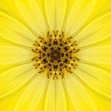 Yellow Mandala Concentric Flower Center Kaleidoscope Stock Photos