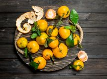 Yellow mandarins with leaves on a tray. On black wooden background royalty free stock images