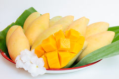 Yellow mango fruit. Is dessert thaifood Stock Image