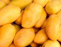 Yellow mango pile photo for background or wallpaper. Bunch of tropical fruits Royalty Free Stock Images
