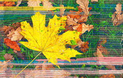 Yellow maple leaf on the abstract background Stock Photos