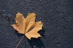 Yellow maple leaf on asphalt Royalty Free Stock Images
