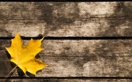 Yellow Maple Leaf Background. With copy space Stock Photography