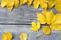 Yellow maple leaf on the boards Stock Photo