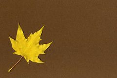 Yellow maple leaf on brown paper Stock Photos
