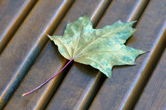 Yellow maple leaf on the brown wooden bench Royalty Free Stock Photography