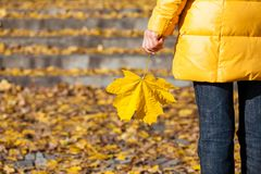 Maple leaf in female hand Royalty Free Stock Image