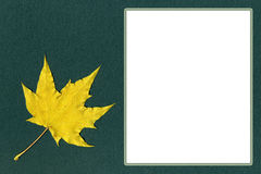 Yellow maple leaf on green paper with space for text Stock Images