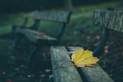 Yellow Maple Leaf on Grey Wooden Bench Stock Images