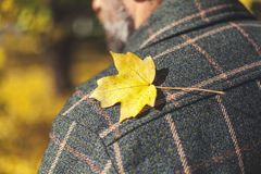 Yellow maple leaf lies on plaid jacket Stock Photo