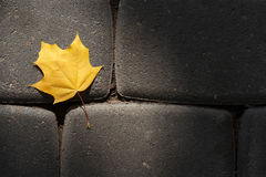 Yellow maple leaf lying on the pavement made of natural stone Stock Images