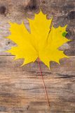 Yellow maple leaf lying on a wooden board. Yellow maple leaf lying on a old rough wooden board Royalty Free Stock Photo