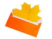 Yellow maple leaf in orange envelope Royalty Free Stock Images