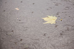 Yellow maple leaf in puddle Royalty Free Stock Photography