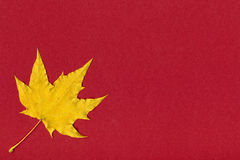 Yellow maple leaf on red paper Royalty Free Stock Photo