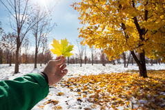 Yellow maple leaf in Snowy Park Royalty Free Stock Photos