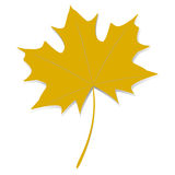 Yellow maple leaf. Stock Image