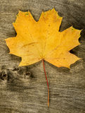 Yellow maple leaf on wooden background Stock Photo