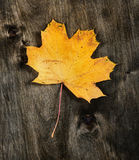 Yellow maple leaf on wooden background Stock Images