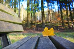 Yellow maple leaf on the wooden bench in the autumn park. royalty free stock image