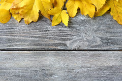 Yellow maple leaf on wooden boards Royalty Free Stock Photos