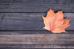 Yellow maple leaf on wooden surface, top viw Stock Image