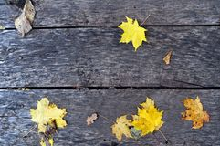 Yellow maple leaves. On a gray wooden plank Royalty Free Stock Photos
