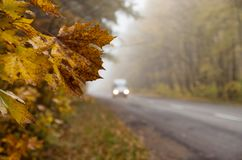 Yellow maple leaves against a background of blurry car headlights stock photos