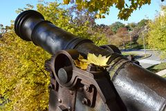 Yellow maple leaves on the ancient cannon. In a city park royalty free stock photography