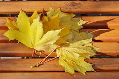 Yellow maple leaves on a bench in the park. Yellow maple leaves on a bench in a city park stock image