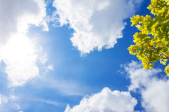 Yellow maple leaves and blue sky with clouds, sun Royalty Free Stock Photo