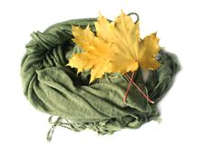 Yellow maple leaves and green scarf Stock Image