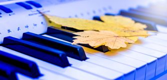 Yellow maple leaves on the keys of the piano. Autumn blues_ stock photography