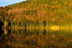 Yellow maple leaves in Mont Tremblant National Park in fall. Canada Royalty Free Stock Image