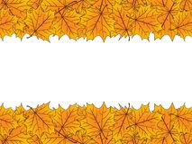 Yellow maple leaves over white. Autumn vector background. Yellow maple leaves over white. Autumn vector background vector illustration